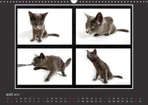 Quelles mimiques ces chatons (Calendrier mural 2015 DIN A3 horiz