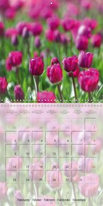 The Pink Garden (Wall Calendar 2015 300 × 300 mm Square)