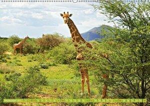 Afrikas Giraffen ganz groß: Elegante Riesen der Savanne