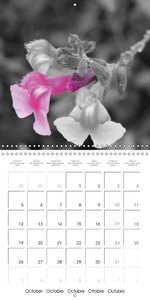 Colour of spring (Wall Calendar 2015 300 × 300 mm Square)