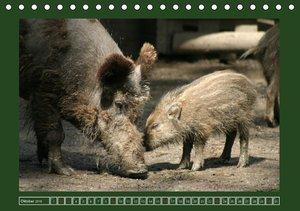 Schweinkram - Die Wildschweine sind los (Tischkalender 2016 DIN