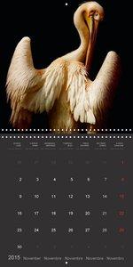 Exceptional Animal Portraits (Wall Calendar 2015 300 × 300 mm Sq