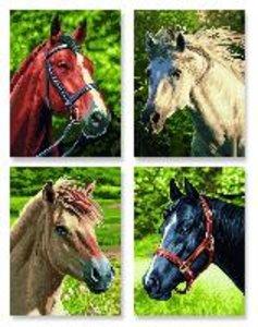 Schipper Malen nach Zahlen Pferde + Pony (Quattro)