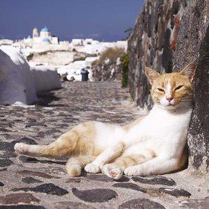 Greek Island Cats 2018 What a Wonderful World