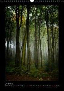 Forest Moods (Wall Calendar 2015 DIN A3 Portrait)