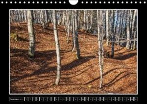 Leaves, Trees And Forest (Wall Calendar 2015 DIN A4 Landscape)