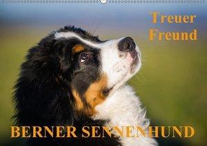 Treuer Freund Berner Sennenhund