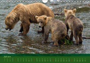 Steinwald, M: Bärenkalender 2015 CH-Version (Wandkalender 20