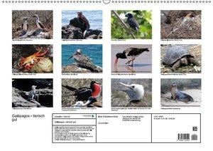 Galápagos - tierisch gut