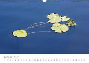 (H2O)12 in Colour (Wall Calendar 2015 DIN A3 Landscape)