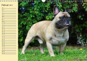 Französische Bulldogge - Clown auf 4 Pfoten