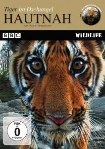 Hautnah: Tiger im Dschungel