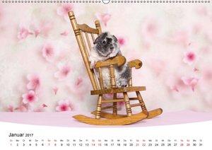 Niedliche Meerschweinchen (Wandkalender 2017 DIN A2 quer)