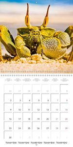 Crabs - solitary crawlers (Wall Calendar 2015 300 × 300 mm Squar