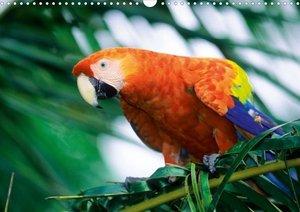 Costa Rica (Posterbuch DIN A4 quer)