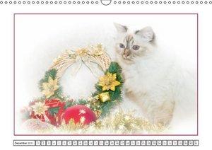 Viola, M: Cats - Faithful Companions