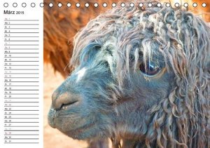 Stanzer, E: Alpakas und Lamas (Tischkalender 2015 DIN A5 que