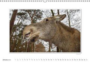 Emotional Moments: European Elk. UK-Version (Wall Calendar 2015