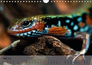 Reptilien Schlangen, Echsen und Co. (Wandkalender 2016 DIN A4 qu