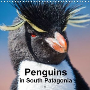 Penguins in South Patagonia (Wall Calendar 2015 300 × 300 mm Squ