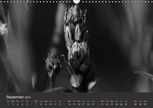 Wild Ones (Wall Calendar 2015 DIN A3 Landscape)