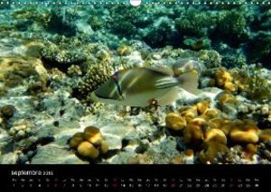 La vie sous-marine Sharm el Sheikh (Calendrier mural 2015 DIN A3