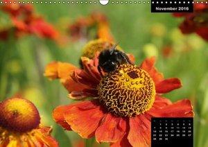 Flora&Fauna Impressionen aus dem Park der Sinne (Wandkalender 20