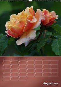 Zarte Schönheiten - Bezaubernde RosenblütenAT-Version (Wandkalen