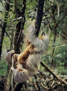 AMAZONIA - Abenteuer im Regenwald in 3D (+ 2D-Version)