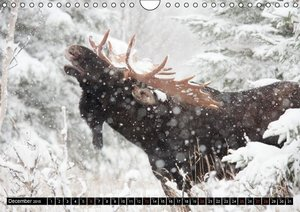 MOOSE / UK-Version (Wall Calendar 2015 DIN A4 Landscape)