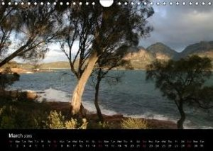 Forests photographed on four continents (Wall Calendar 2015 DIN