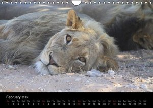 Lions - Kings of Africa (Wall Calendar 2015 DIN A4 Landscape)