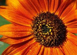 Sonate - Visuelle Musik der Blumen (Posterbuch DIN A2 quer)