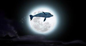 Der Delfin (Blu-ray)
