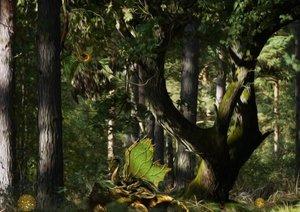 Pfeifer, Y: Mystical Forest (Posterbuch DIN A4 quer)