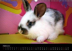 Les heureux lapins (Calendrier mural 2015 DIN A3 horizontal)