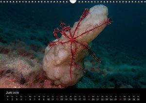 Farben des Mittelmeers (Wandkalender 2016 DIN A3 quer)