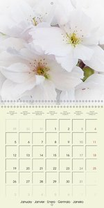 Gorgeous Flowers - all in white (Wall Calendar 2015 300 × 300 mm