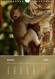 Macaques (Wall Calendar 2015 DIN A4 Portrait)