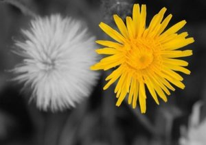 Couleurs du printemps (Livre poster DIN A3 horizontal)