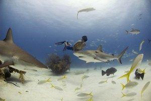 Sharkwater-Wenn Haie sterben