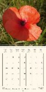 Magic wild flowers (Wall Calendar 2015 300 × 300 mm Square)