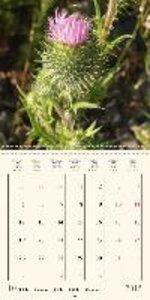 Magic wild flowers (Wall Calendar 2015 300 × 300 mm Square)