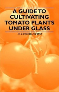 A Guide to Cultivating Tomato Plants Under Glass