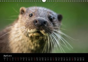 Wildlife Around The World (Wall Calendar 2015 DIN A3 Landscape)