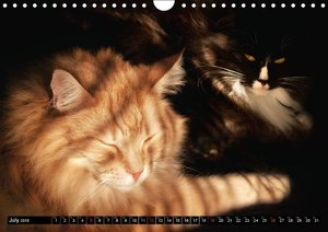 The fairest of them all (Wall Calendar 2015 DIN A4 Landscape)