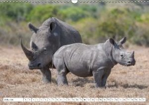 Emotional Moments: Rhinos UK Version