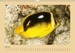 Unterwasserwelt Hawaii (Wandkalender 2017 DIN A3 quer)