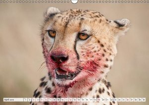Emotional Moments: Cheetah UK Version (Wall Calendar 2015 DIN A3