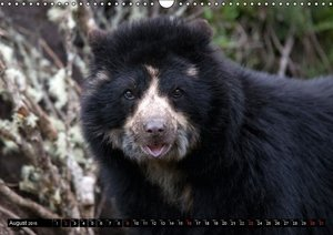 ANDEAN BEAR / UK-Version (Wall Calendar 2015 DIN A3 Landscape)